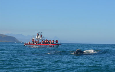 Ocean Blue Whale and Dolphin Watching Trip