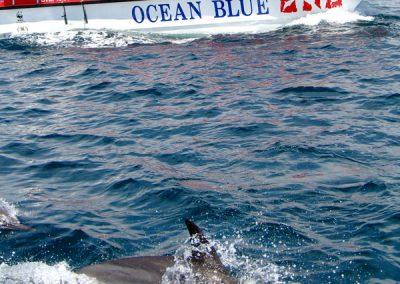 ocean-blue-adventures-plett-1